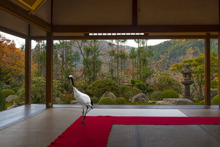 Karen Knorr, Journey to the Great Sage, Hosen-in Temple Ohara, Japon, série Monogatari, 2015 Courtesy the artist and Les filles du calvaire Gallery, Paris