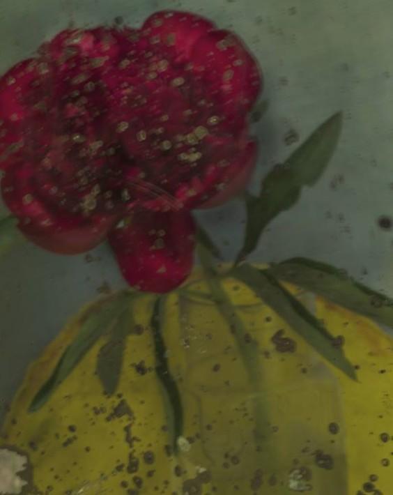 L'avant-dernière pivoine, 2011.  Tirage charbon couleur. 57 x 43 c (c) Sarah Moon