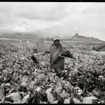 Atelier du 17 novembre 2014 : Marie Dorigny, une femme photographe