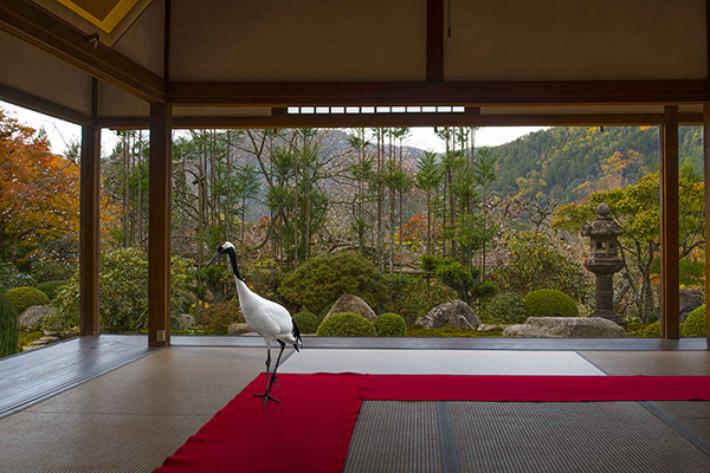 Karen Knorr, Journey to the Great Sage, Hosen-in Temple Ohara, Japon, série Monogatari, 2015 Courtesy the artist and Les filles du calvaire Gallery, Paris