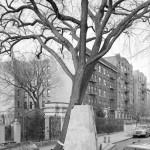 Mitch Epstein .New York Trees, Rocks & Clouds . Mois de la photo, Paris