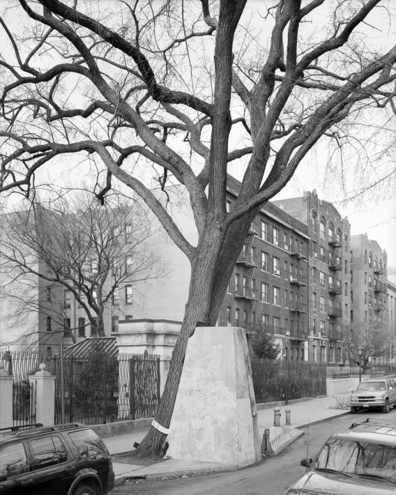 (c) Mitch Epstein  American Elm, Eastern  Parkway, Brooklyn, 2012